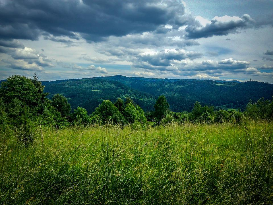 Muszyna, Mountains, Holiday, Meadow, Summer, Nature