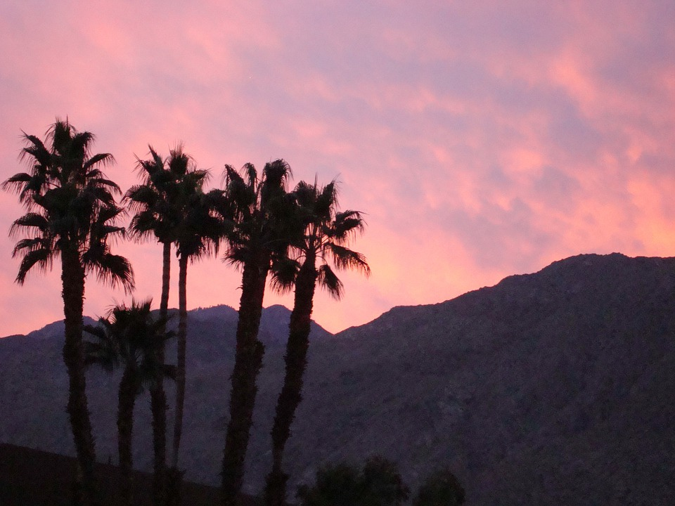 Palm Springs, California, Mountains, Palm Trees, Sunset
