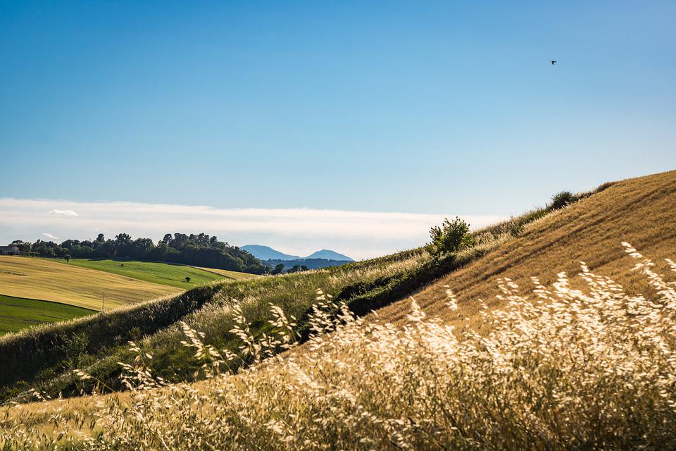 Field, Rural, Mountains, Trees, Countryside, Panorama