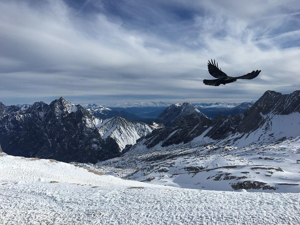 Snow, Winter, Bird, Mountains