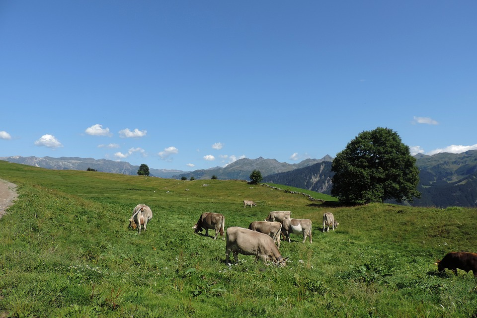 Switzerland, Alps, Landscape, Mountains, Spring, Heaven