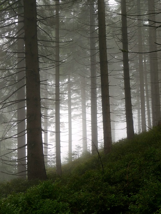 Forest, The Fog, Nature, Dark, Mountains, Haze