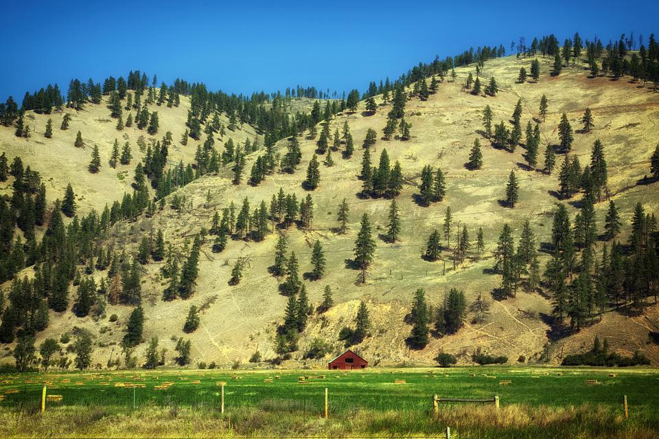Montana, Ranch, Farm, Rural, Mountains, Trees