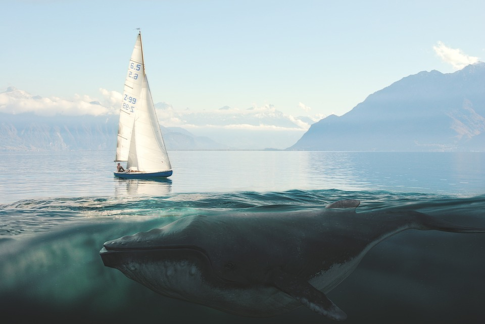 Sailing Boat, Whale, Sea, Mountains, Lake, Underwater