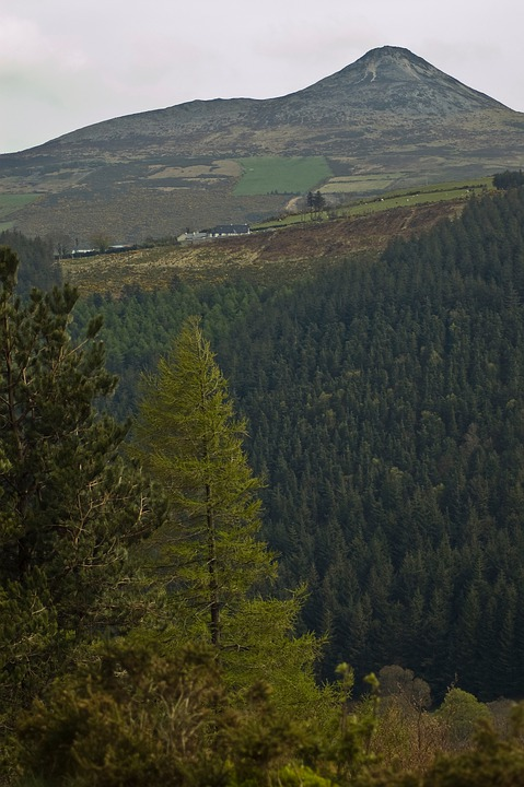 Mountains, Trees, Forest, Wicklow, Great Sugar Loaf