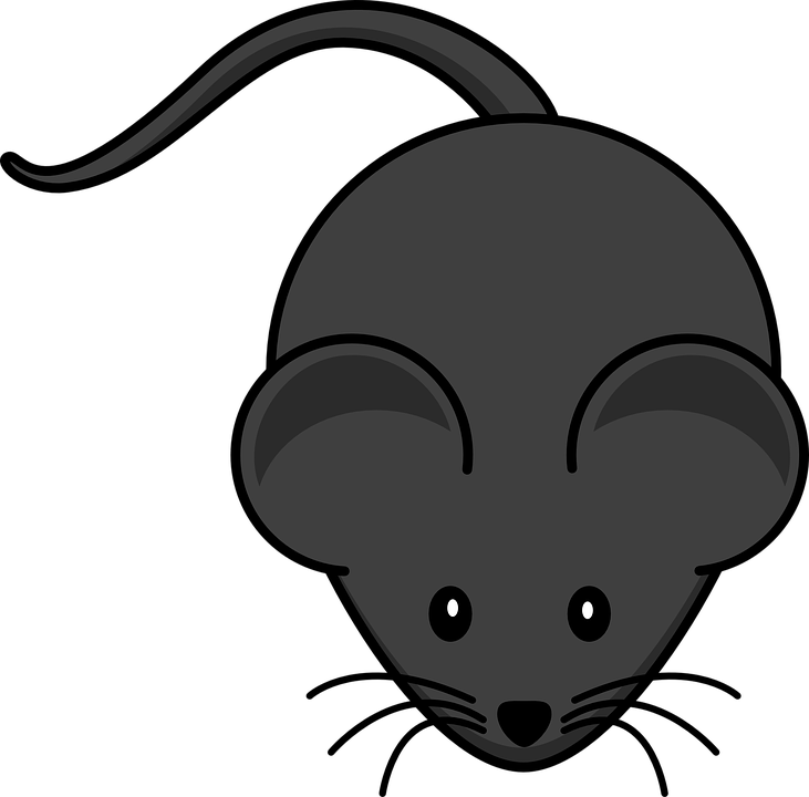 Mouse, Rodent, Rat, Black, Cute, Animal, Tail