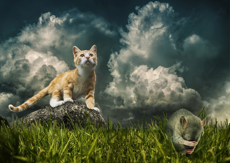 Cat, Mouse, Prey, Hunting, Live, Death, Fear, Despair