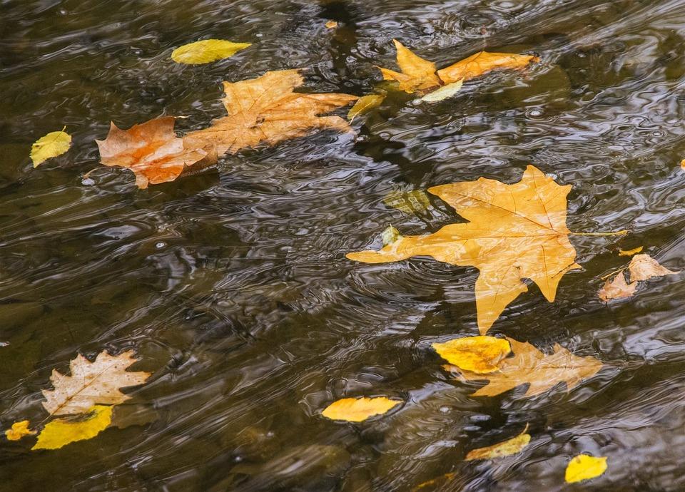 River, Movement, Sheets, Water, Autumn, Park, Slide