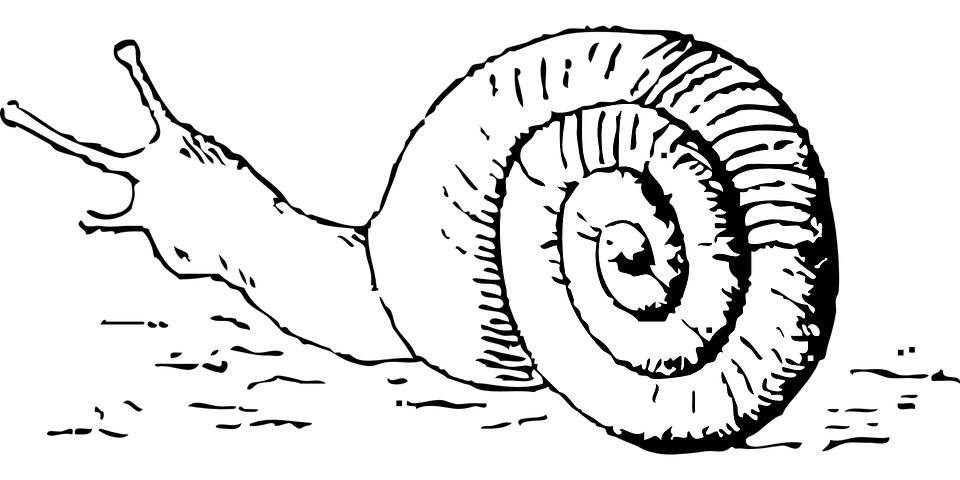 Snail, Animal, Reptile, Antenna, Moving, Shell, Slow