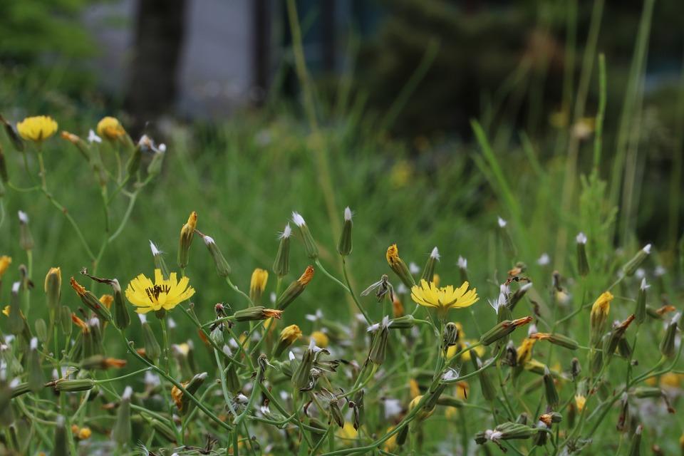 Grass Seeds, Nature, Spring, Mr Hall, Pool, Light