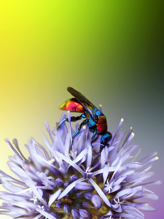 Insect, Mucha, Muchówka, Insects, Nature, Colored