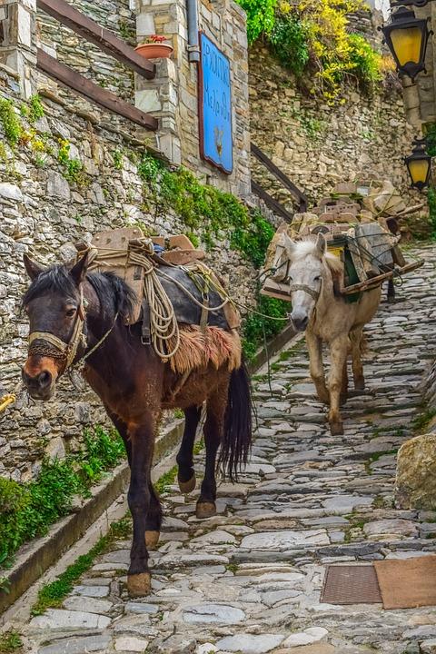 Mules, Path, Cobblestone, Animal, Carrying, Village