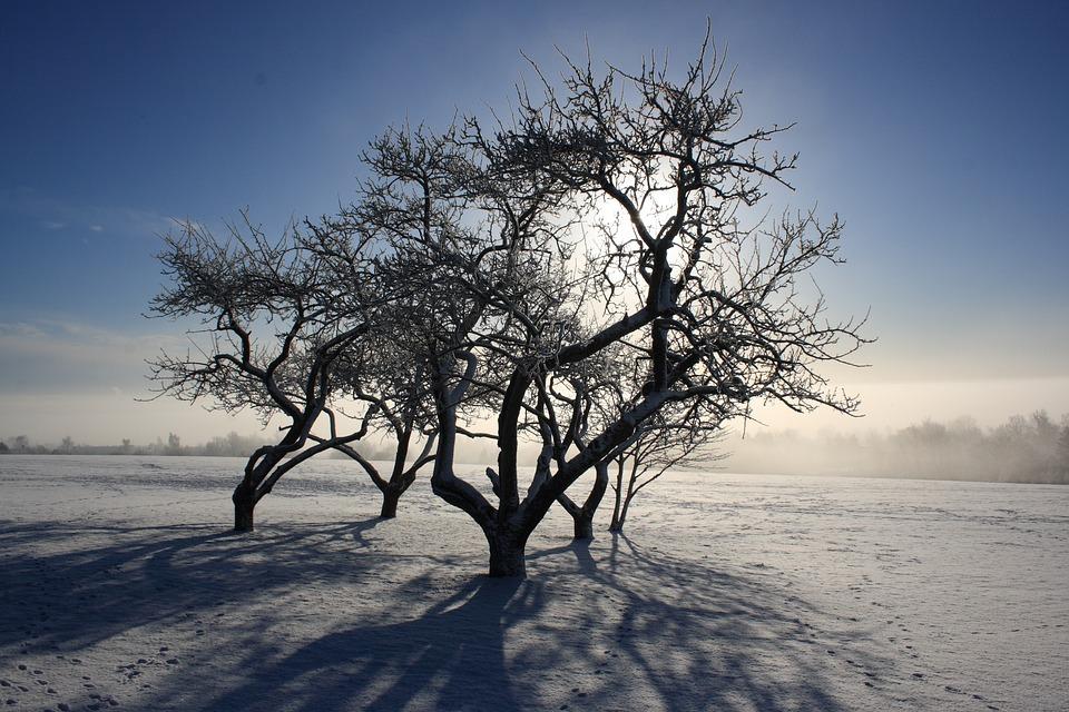 Fyn, Munkebo, Munkebo Tray, Winter, Natural, Wood