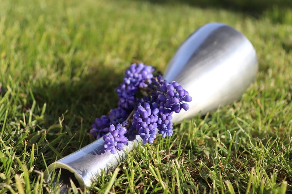 Hyacinth, Blue Hyacinth, Muscari, Blue Muscari