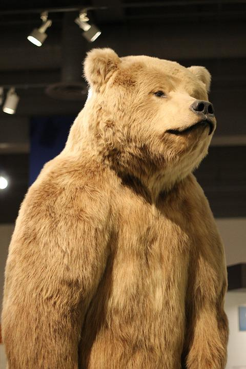 Bear, Museum, Alaska, Fairbanks