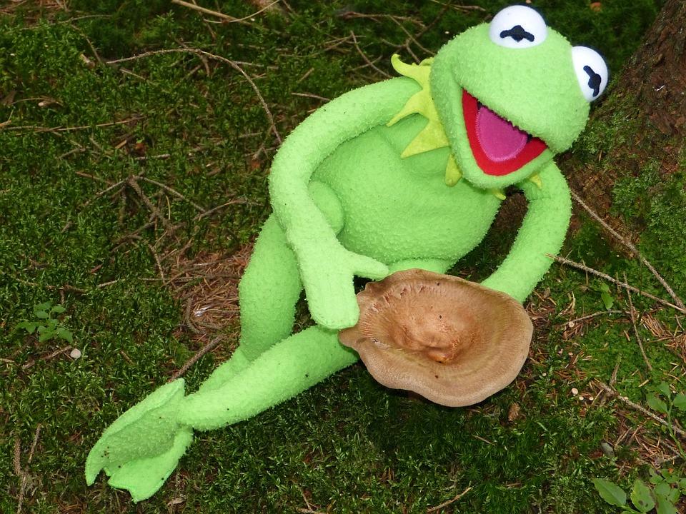 Kermit, Frog, Mushroom, To Find, Autumn, Forest, Green