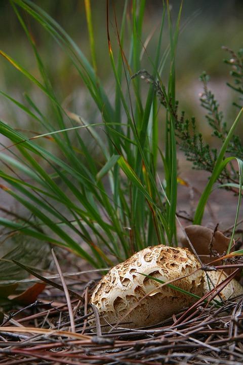 Mushroom, Autumn, Grass
