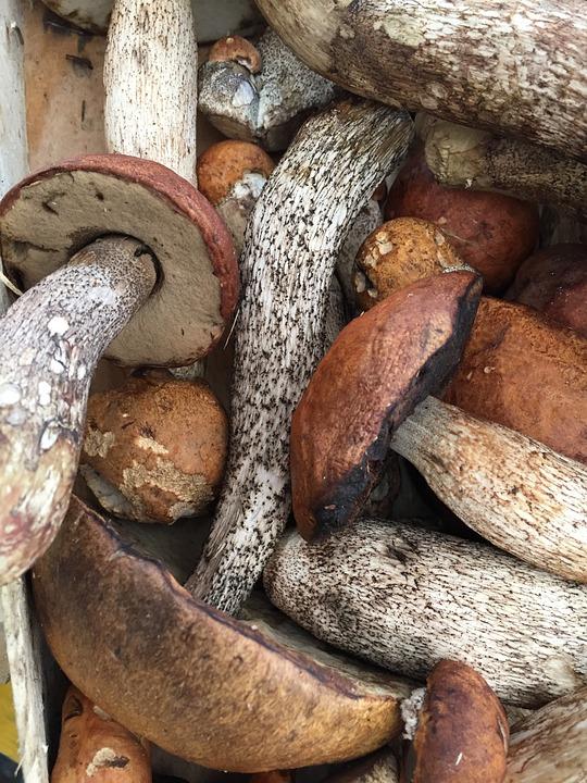 Mushroom, Autumn, Market, Farmers Local Market, Nature
