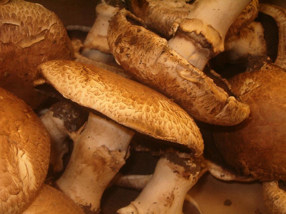 Mushroom, Organic, Cuisine