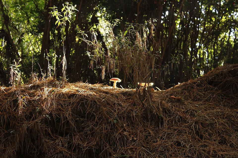 Fungus, Forest, Mushroom, Nature, Wild, Natural, Autumn