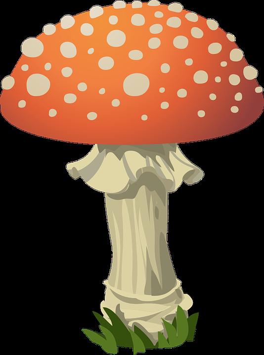 Mushroom, Fly Agaric, Red, Toxic, Nature, Fungus