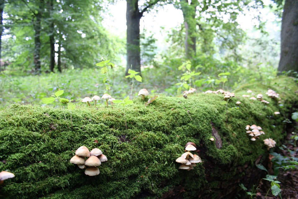 Mushroom, Nature, Autumn, Forest