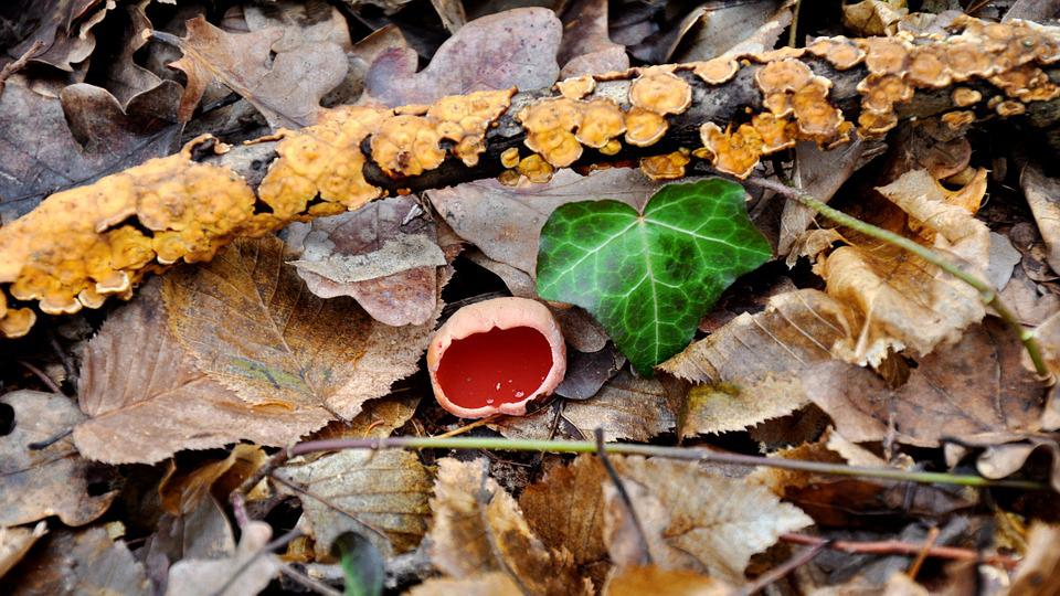 Nature, Spring, Mushroom, Spunk