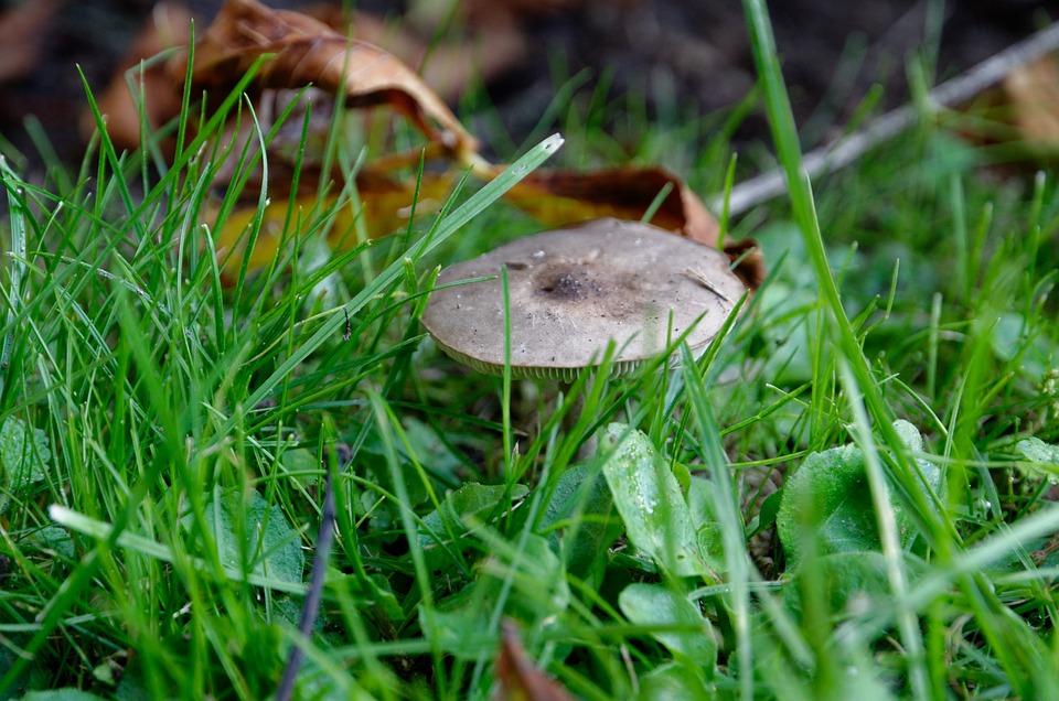 Mushroom, Plant, Toadstool, Mycology, Forest, Wild