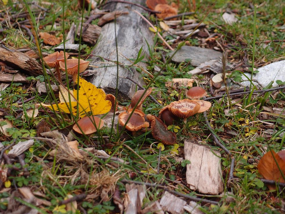 Mushrooms, Autumn, Fungus, Boletus