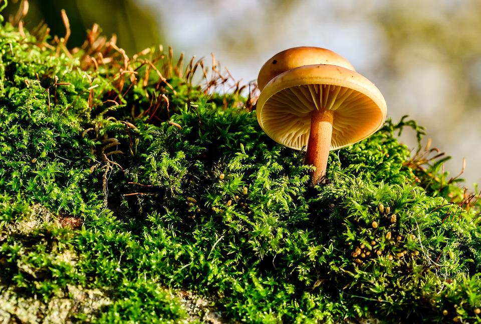 Mushrooms, Moss, Autumn, In The Forest, Toxic, Nature