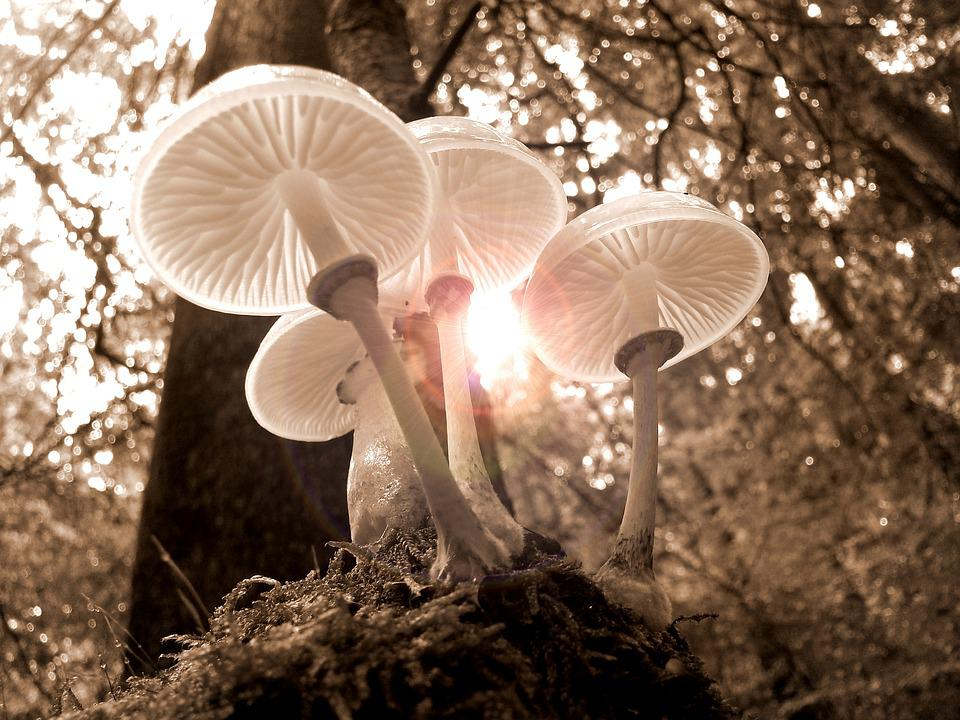 Forest, Mushrooms, Nature, Autumn, Light, Tree