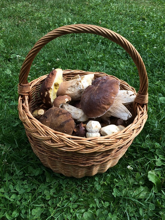 Basket, Mushrooms, Boletus, Autumn, Forest, Edible