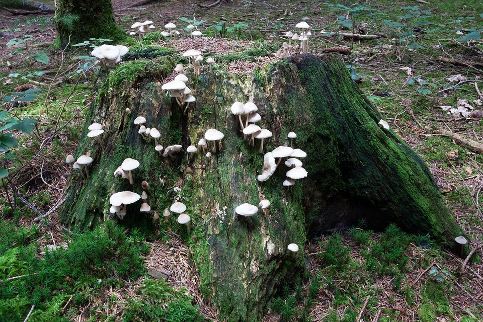 Mushrooms, Tree Stump, Forest, White, Beige, Moss