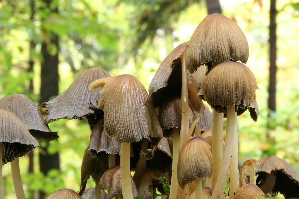 Autumn, Forest, Mushrooms