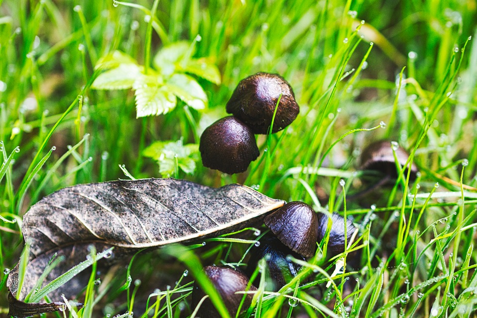 Mushrooms, Autumn, Meadow, Forest, Nature, Forest Floor