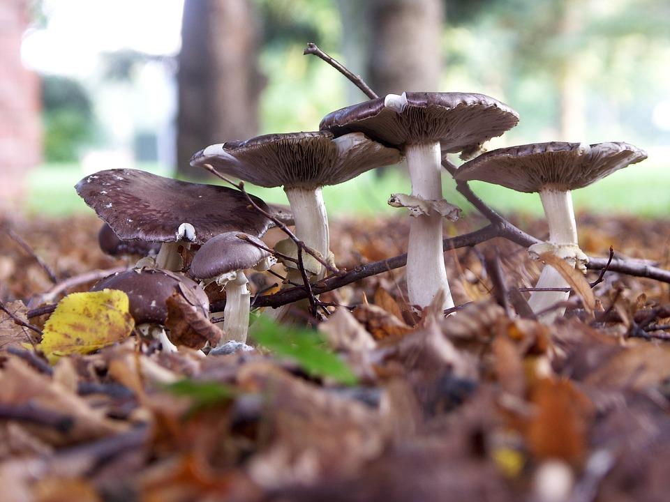 Landscape, Mushrooms, Forest