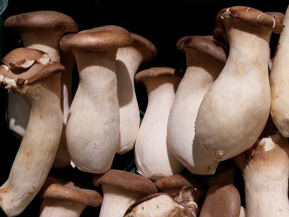Mushrooms, Mushroom, Vegetables, Forest