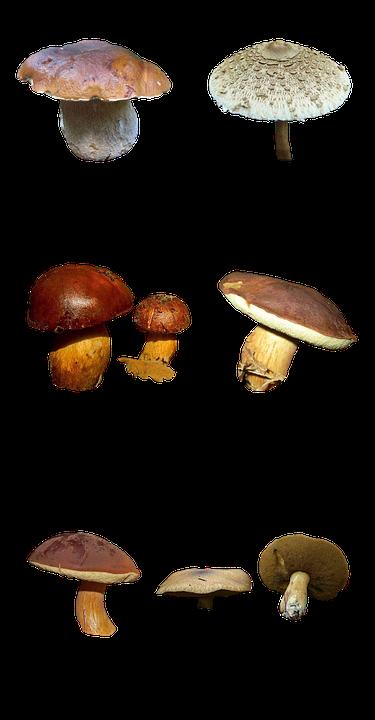 Mushrooms, Nature, Forest, Autumn Weather, Autumn Gold
