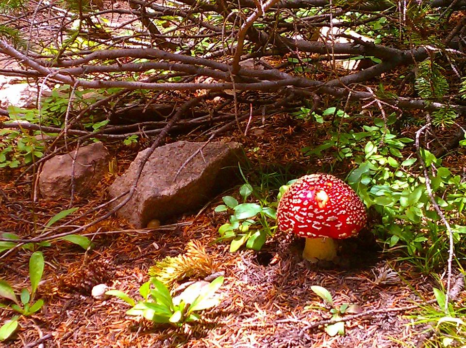 Forest, Mushrooms, Toadstools, Fairy, Nature, Autumn