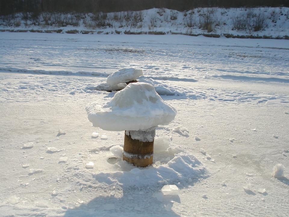 Island Of Usedom, Winter, Ice, Mushrooms, Mushroom