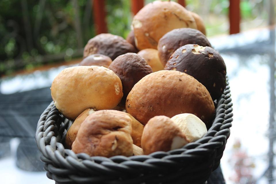 Porcini Mushrooms, Mushroom, Mushrooms, Basket, Autumn