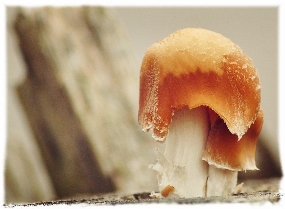 Mushroom, Tree Fungus, Mushrooms, Mushrooms On Tree