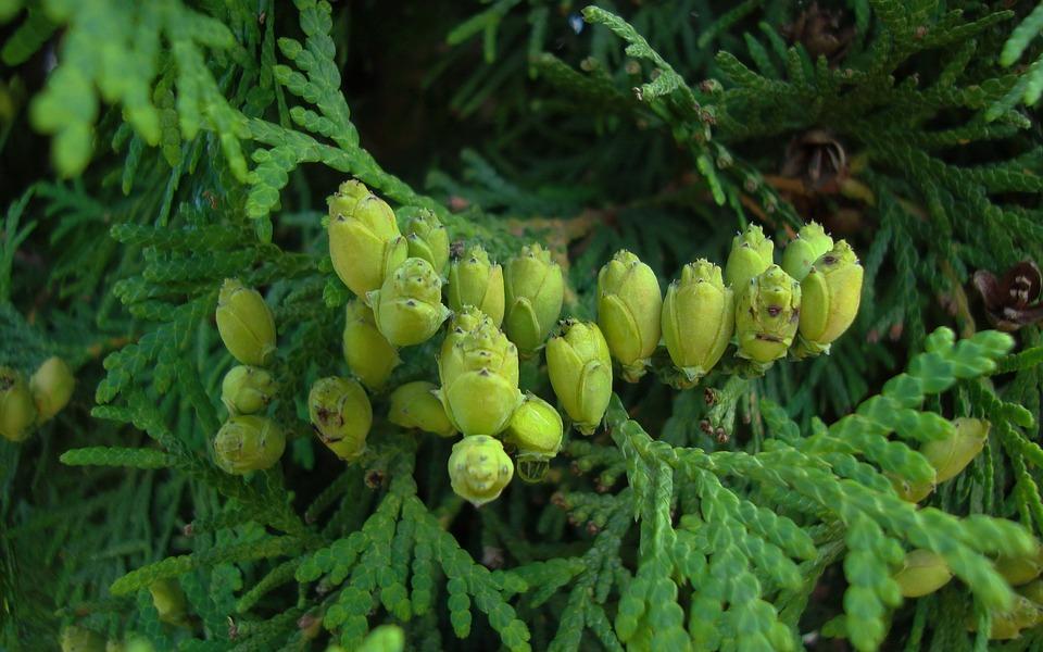 Flora, Nature, Leaves, Mushrooms