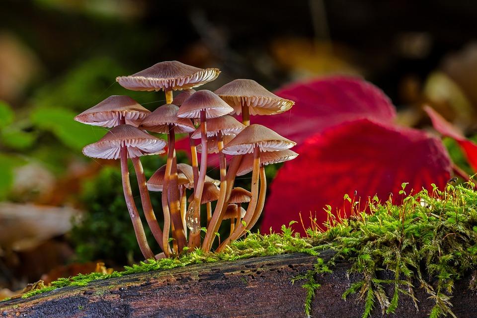 Mushrooms, Sponge, Mini Mushroom, Forest Mushroom, Moss