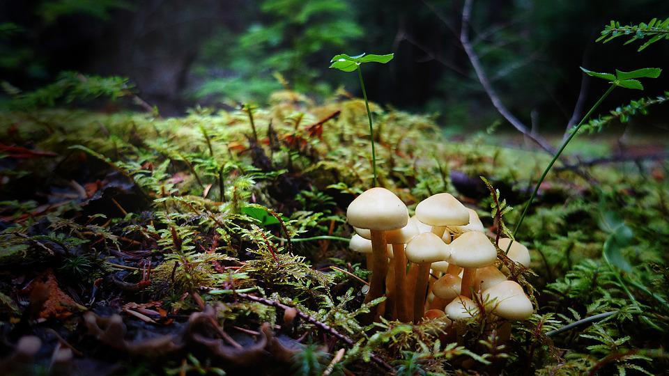 Mushrooms, Forest Ground, Wild Mushrooms, Spore, Sponge