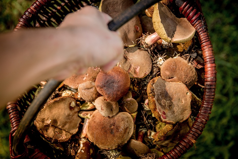 Mushrooms, Shopping Cart, Forest, The Collection Of