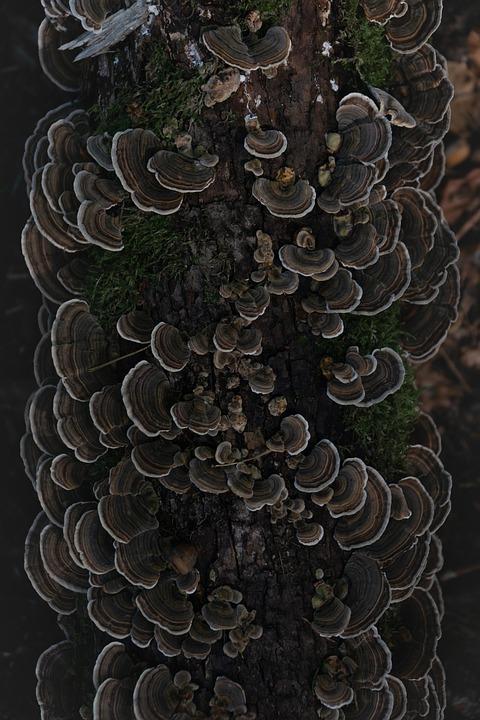 Turkey Tail, Mushrooms, Trunk, Tree, Toadstools, Fungi