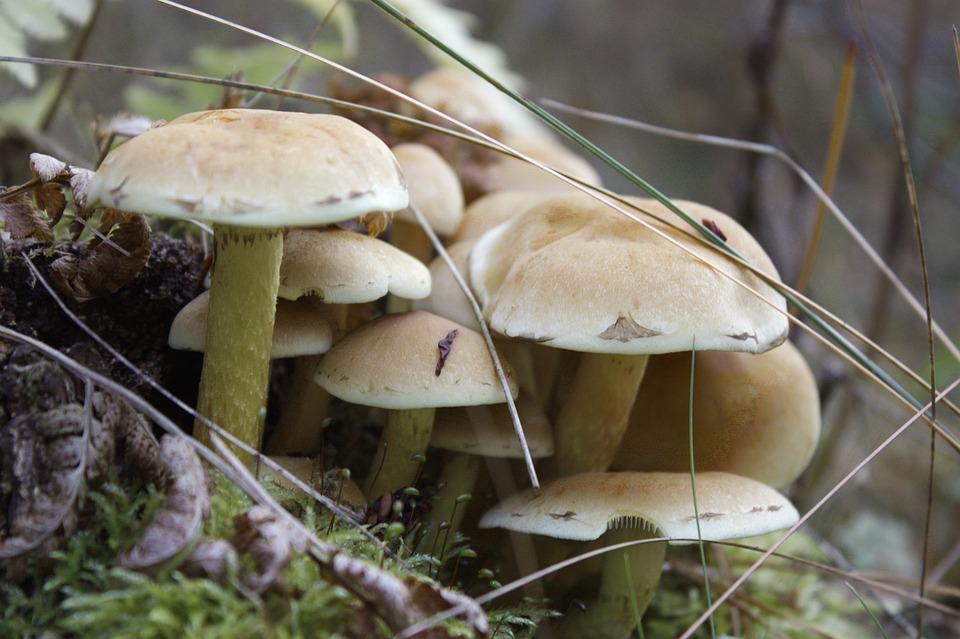 Mushrooms, Poisonous, Wild Mushrooms, Toxic, Wild, Moss