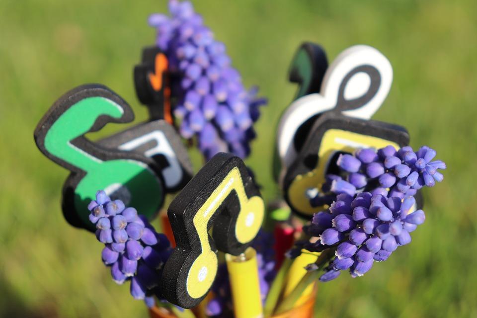 Music, Hyacinth, Blue Hyacinth, Muscari, Blue Muscari