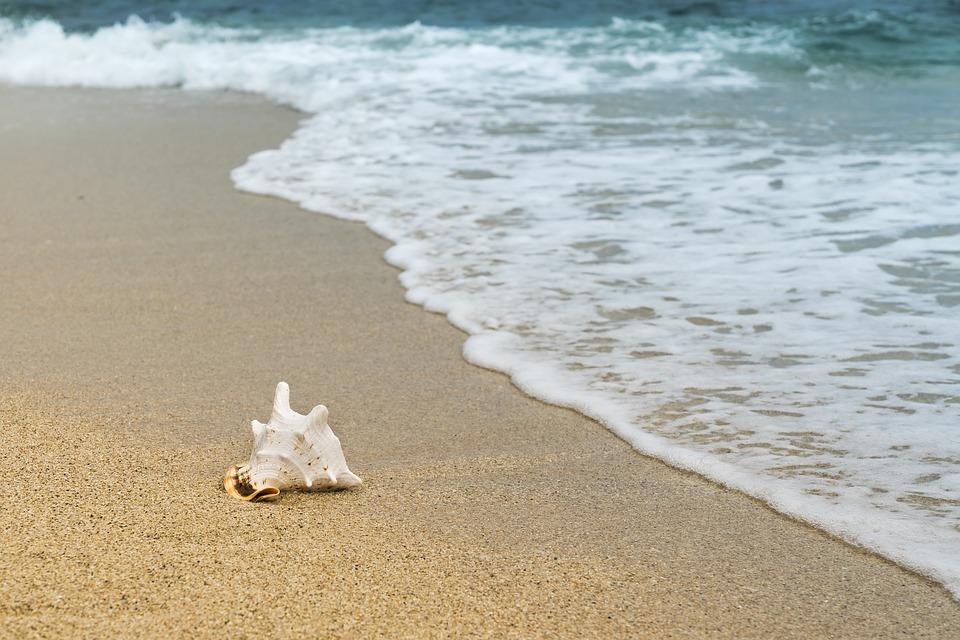 Shellfish, Mussel, Sand, Wave, Beach, Coast, Holidays